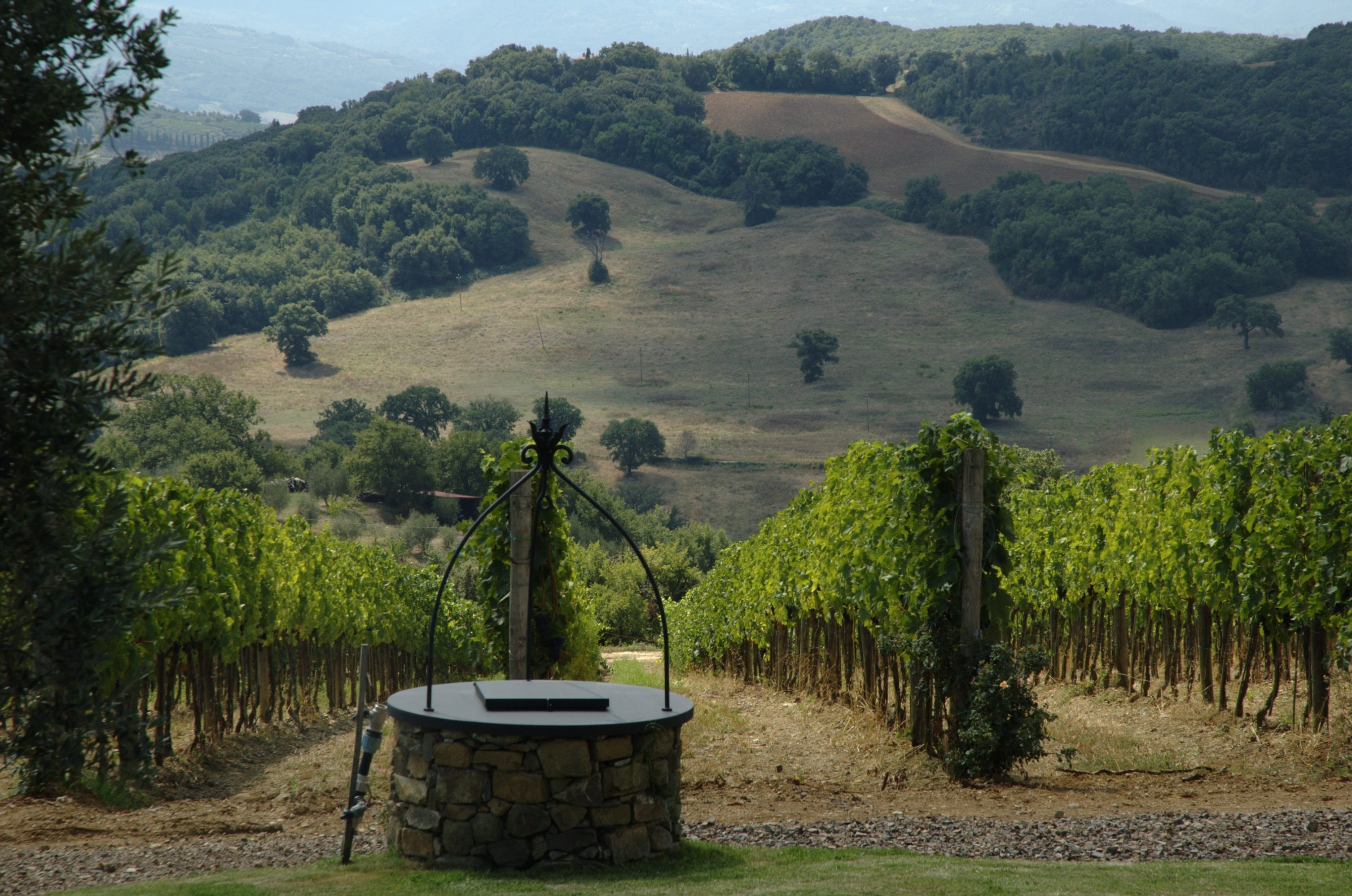 Olmo vineyard at Gianni Brunelli winery
